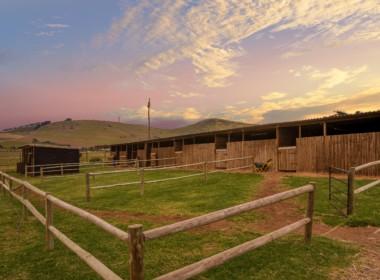 Sue Farm -30